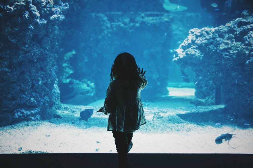 un enfant de dos qui pose une main sur un aquarium géant